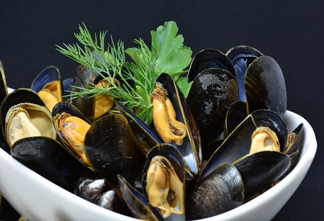 Introduction to mussels