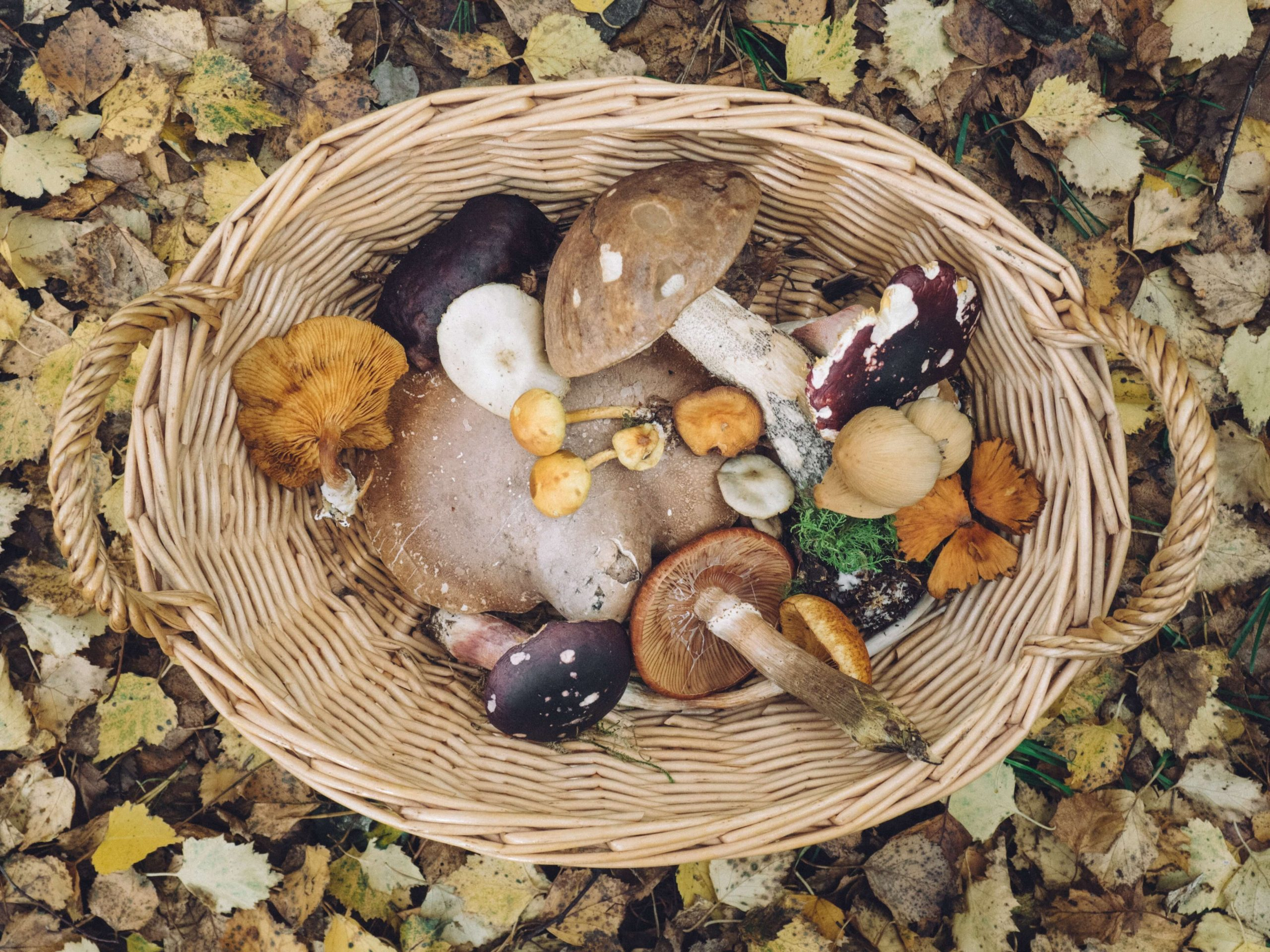 Some of The Different Types of Mushrooms1