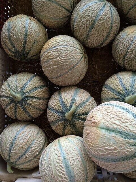 Cantaloupe Melon Nutrition1