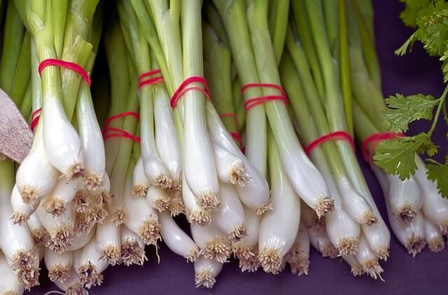 All About Green Onions