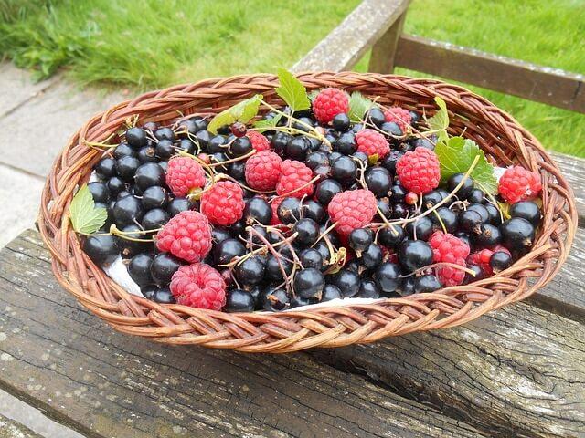 Superfruit Blackcurrants