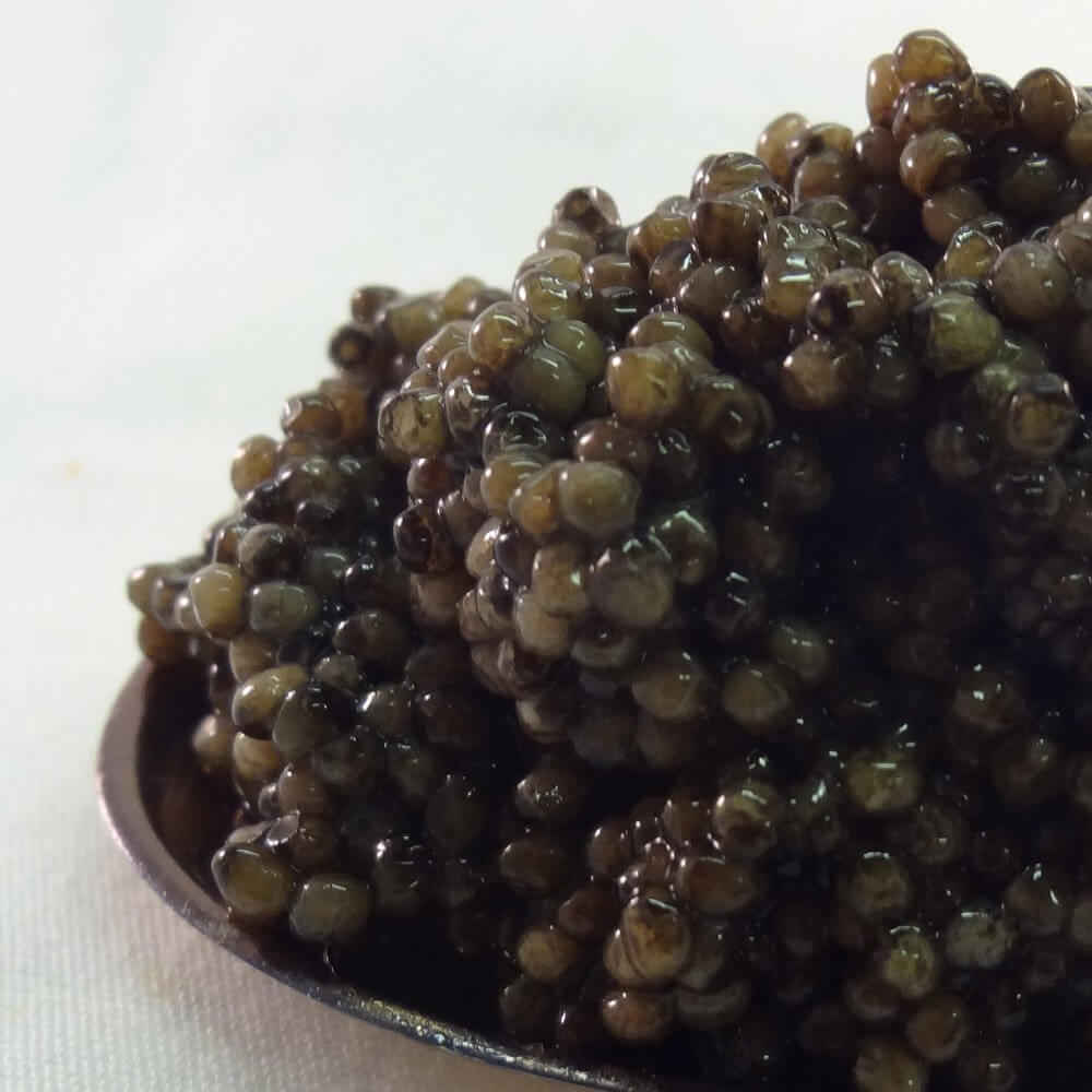 Bemka Russian Ossetra Crown Farmed Caviar